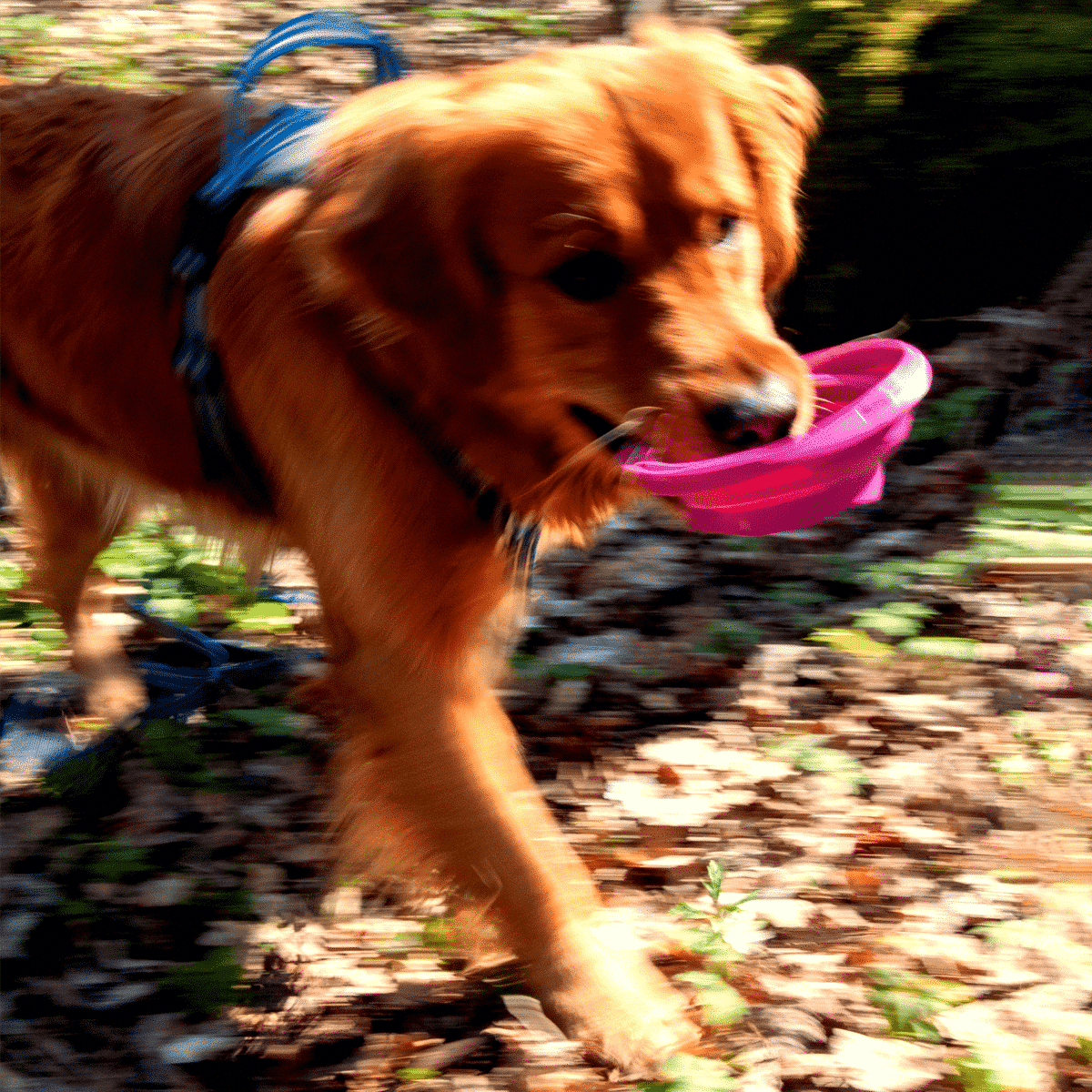 Vikbar vattenskål till hunden