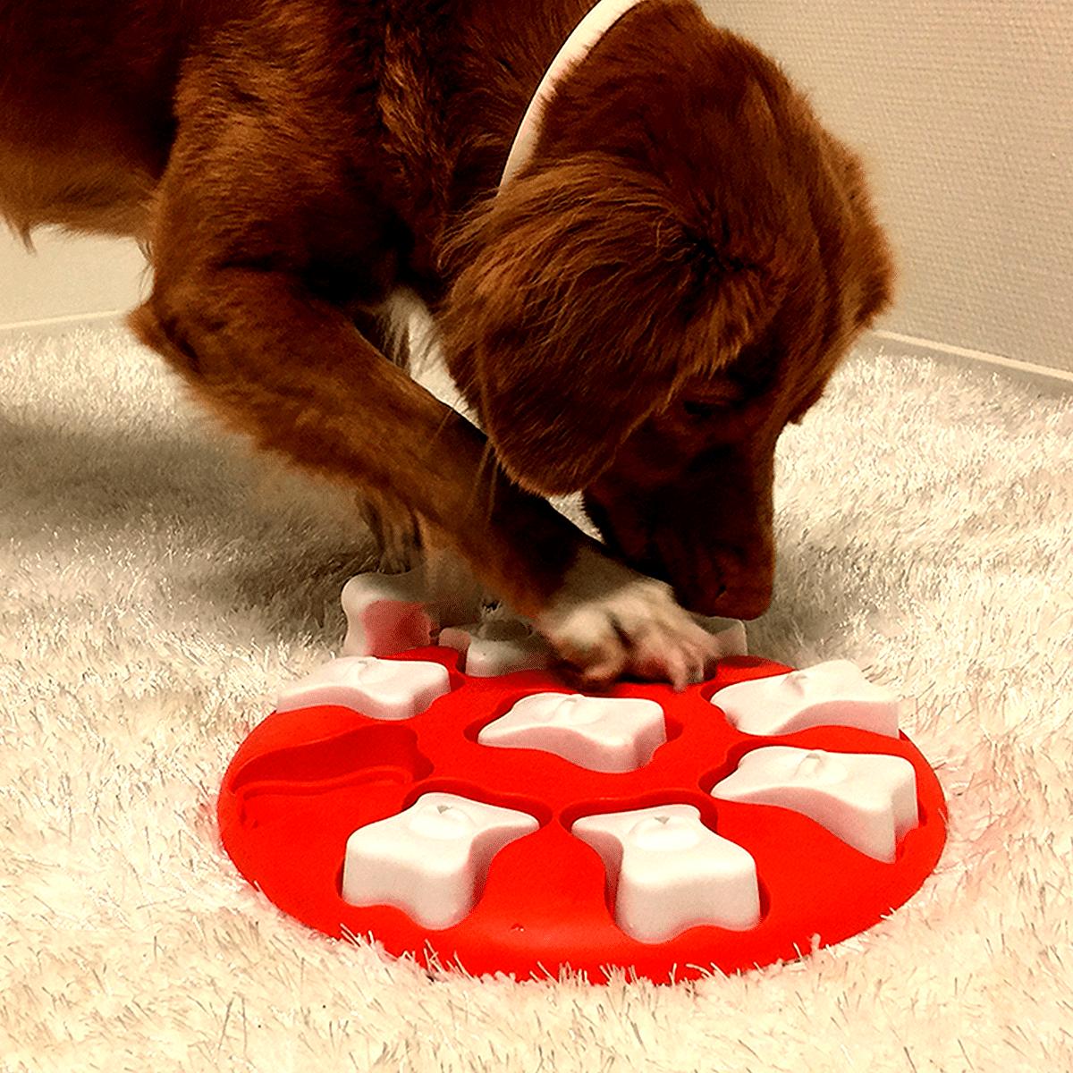 Låt hunden spela ett spel- Dog Smart
