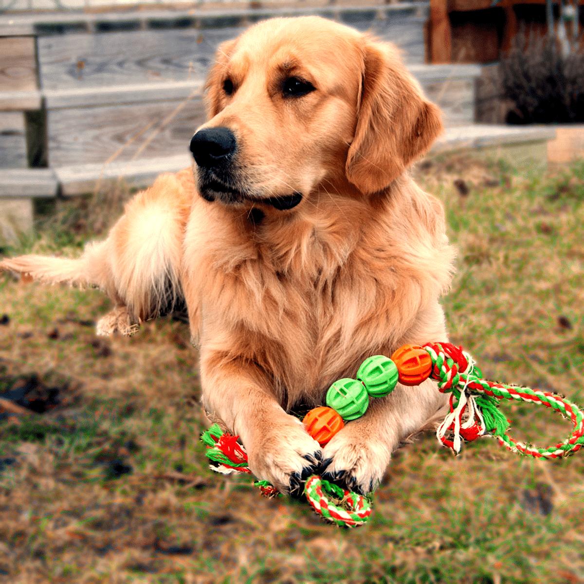 Hundleksak- fyra bollar på rep