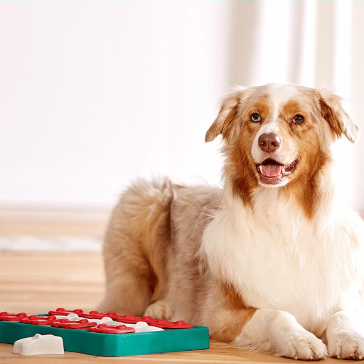 Aktiveringsspel till hund och katt- Dog Brick