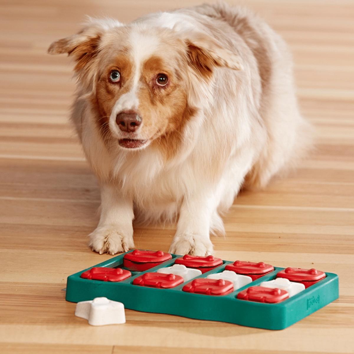 Dog Brick från Nina Ottosson aktiveringsleksak