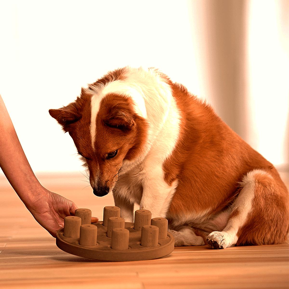 Låt hunden leta efter godiset i spelet Dog Smart