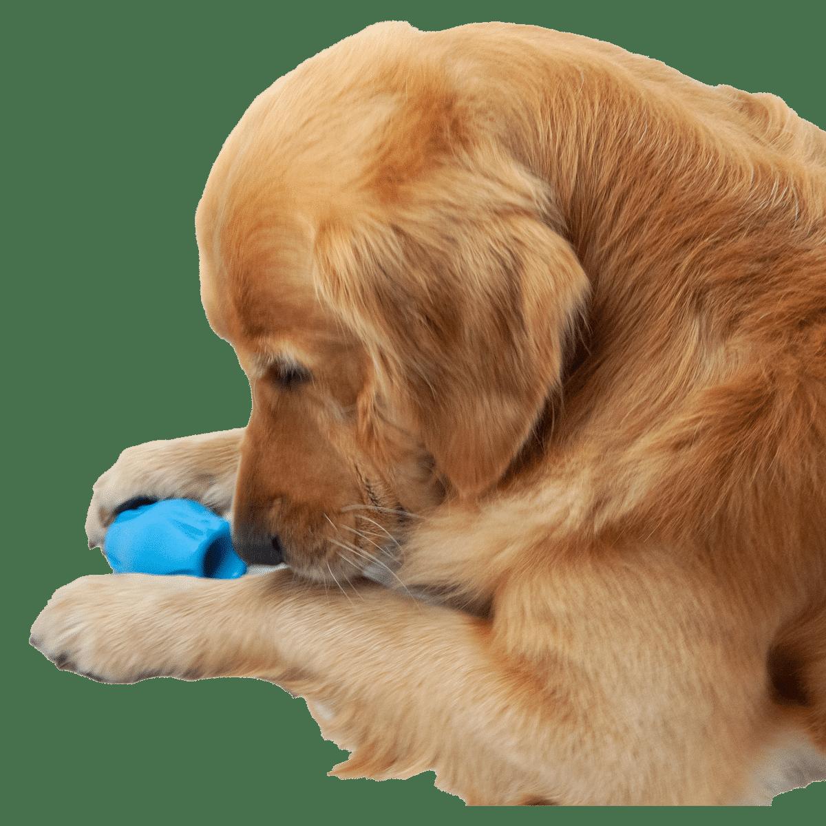 Spännande och rolig hundleksak från Jolly Pet
