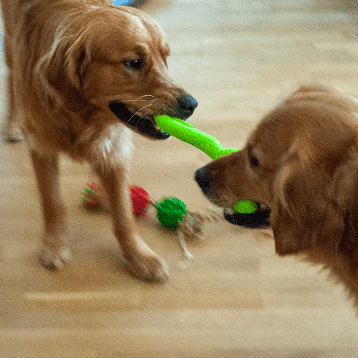 Dragkamp med leksaksorm- hundaktivering