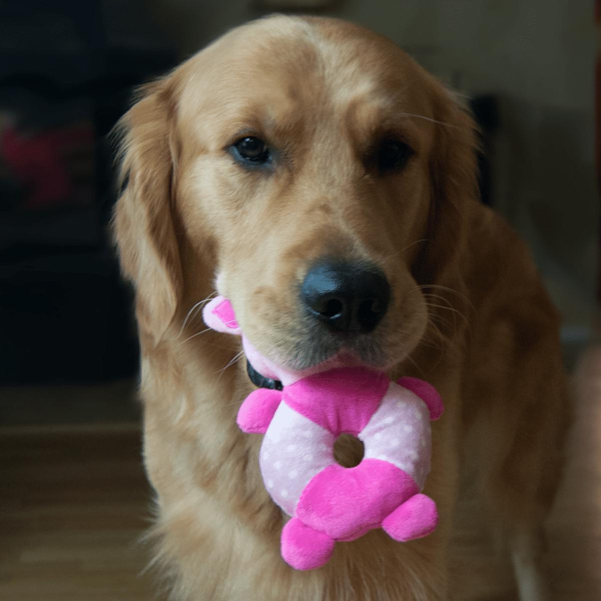 Gullig hundleksak- en rosa plyschgris