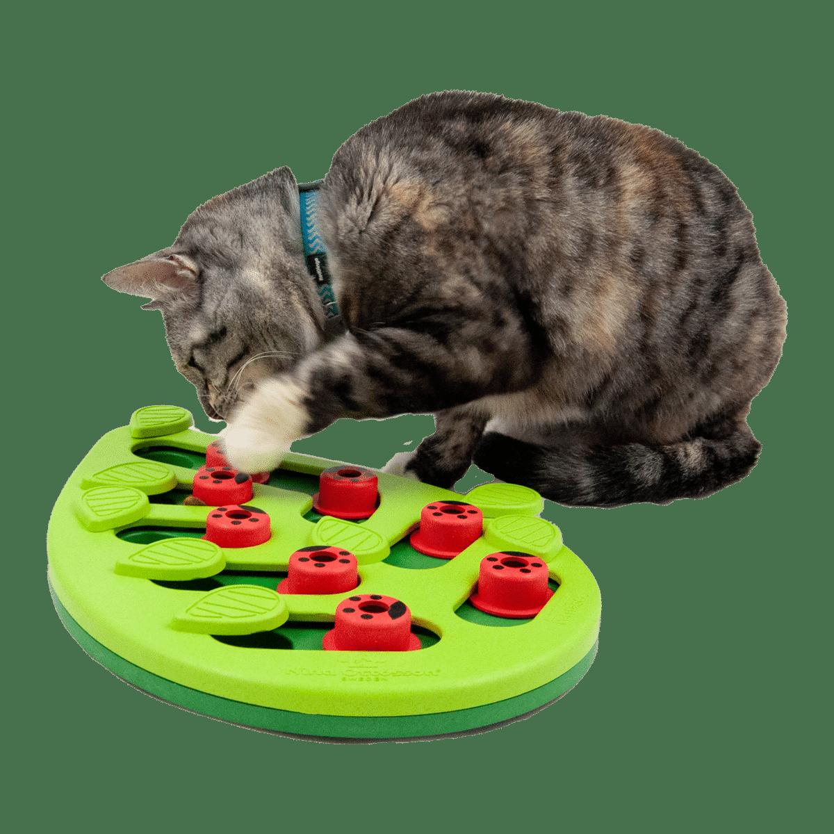 Roligt aktiveringsspel för katten- Buggin out