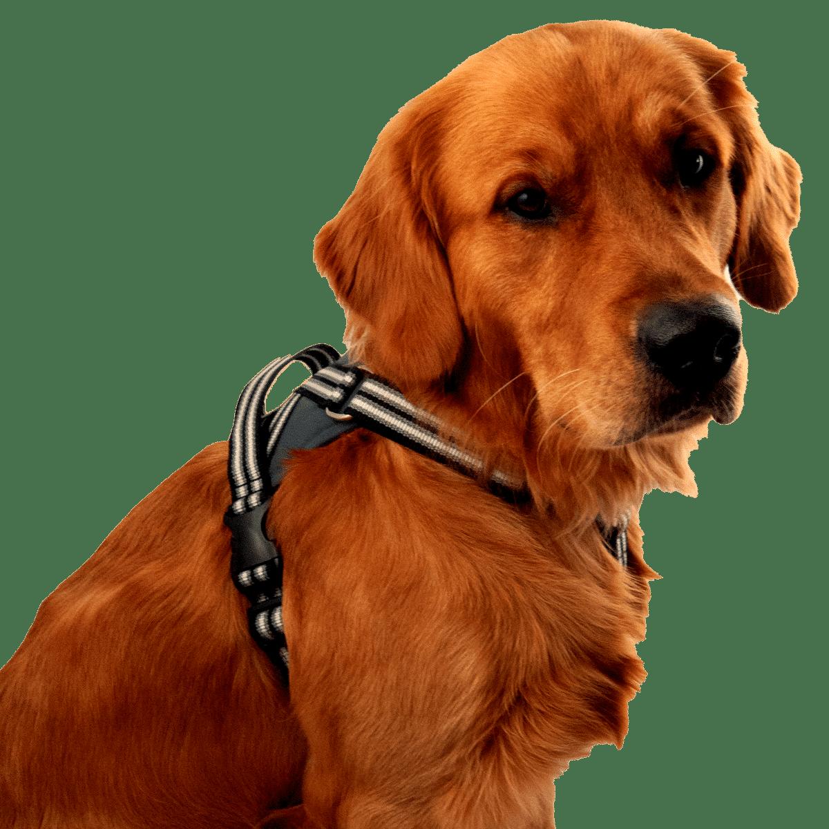 Antidrag hundsele från Metizo