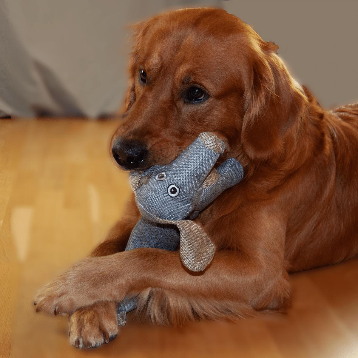 Buddy- hundens bästa vän -hundleksak