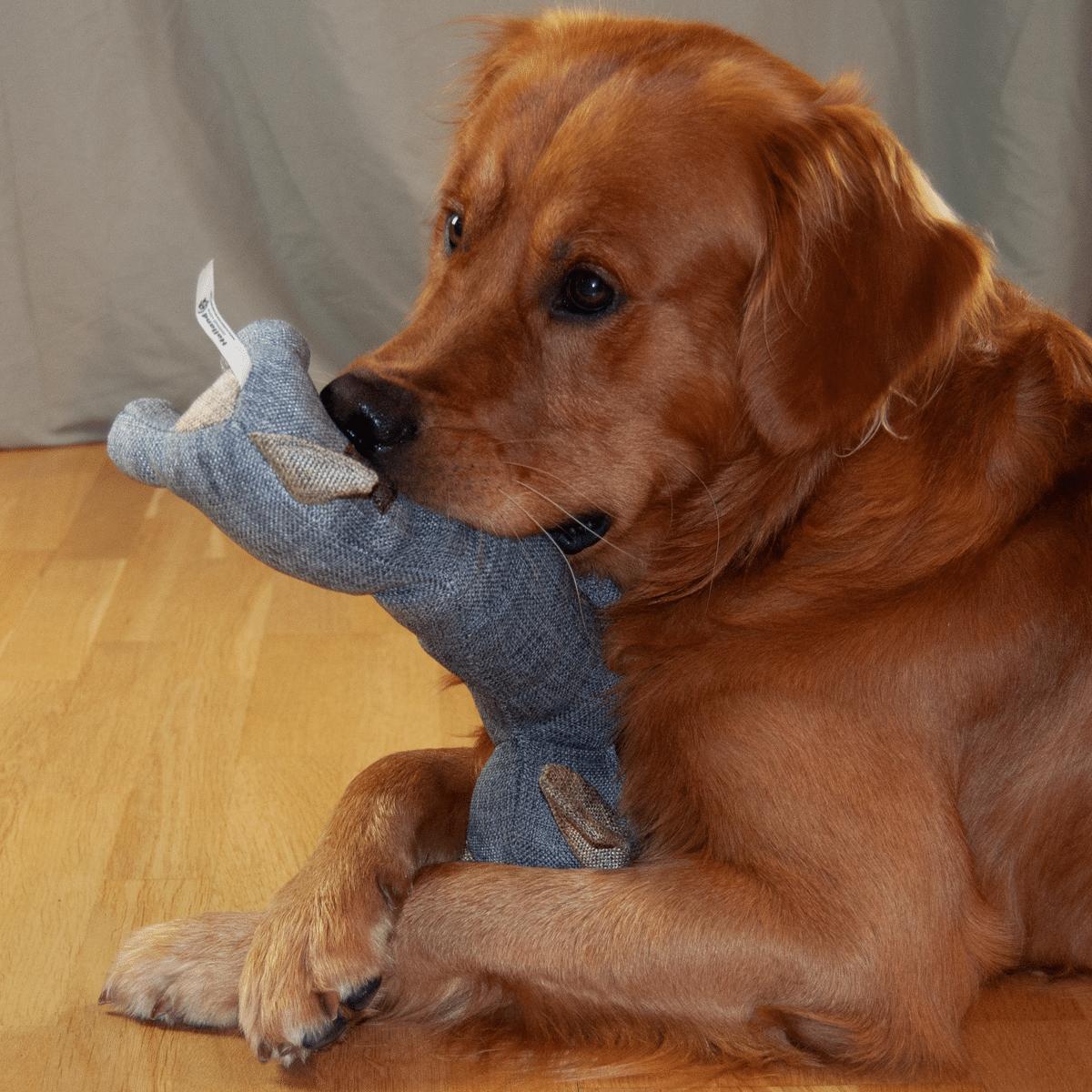 Buddy - rolig hundleksak
